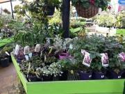 Howrah Nursery Plants (6)