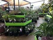 Howrah Nursery Plants (7)