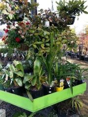 Howrah Nursery Plants (8)