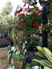 Howrah Nursery Plants (9)