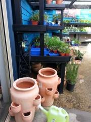 Howrah Nursery Garden Pots, tools and accessories (10)